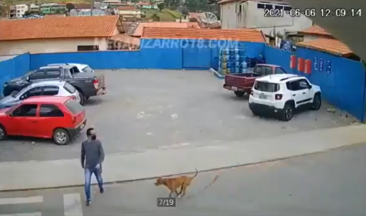 Video viral perro