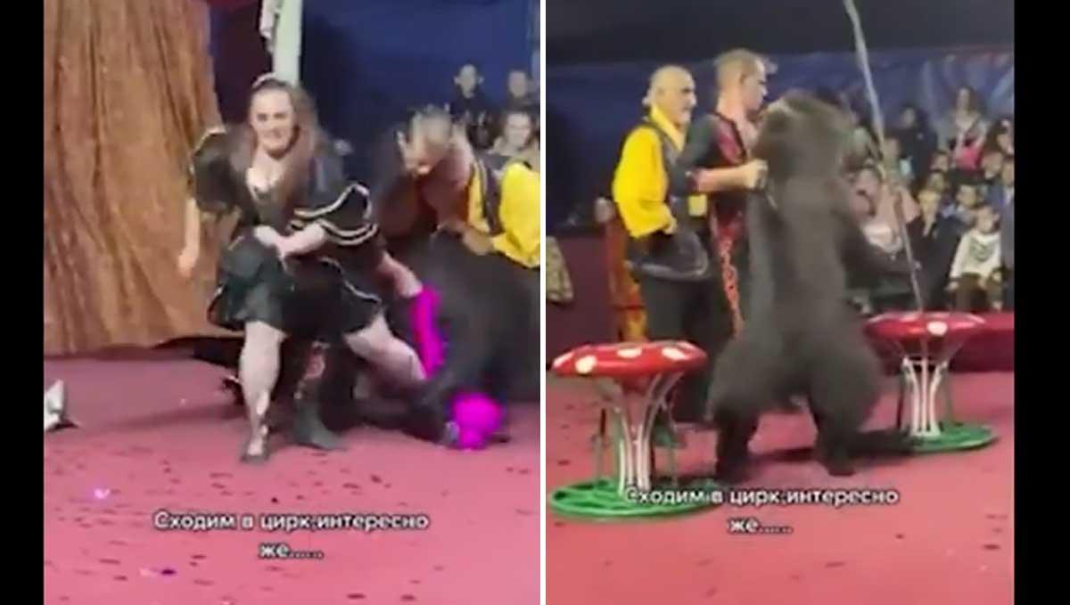 ataque de oso