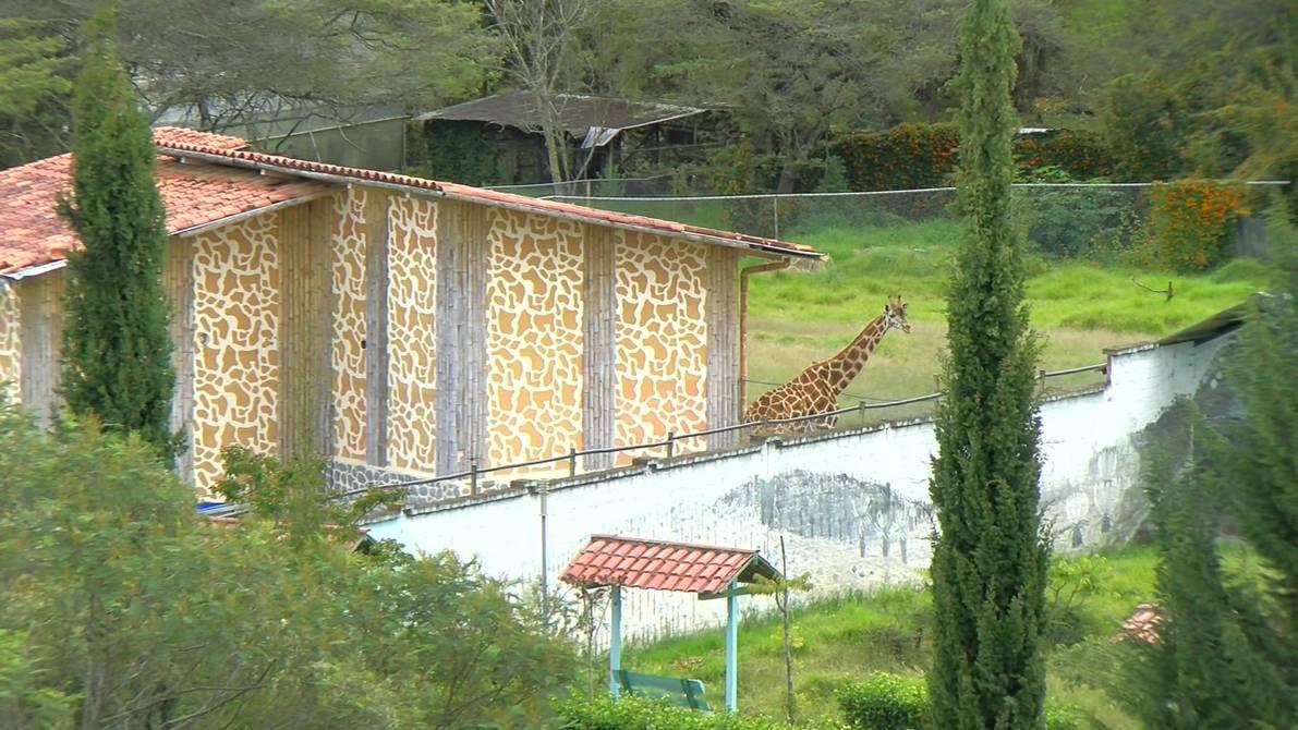 jirafa loja
