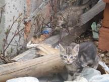 kitties hiding as we begin our trek