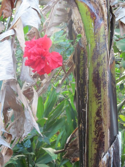 Flora outside our door