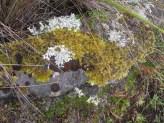 A tiny, mossy world on a rock along the trail.