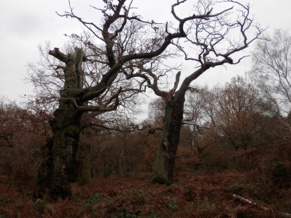 ncient Oaks of Sherwood