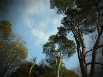 Clumber woods