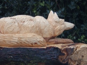 Fox - Arnot Hill