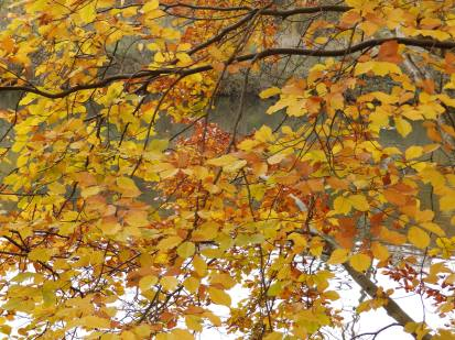 Leaves at Clumber Lakes