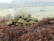 Wall and bracken, near Matlock
