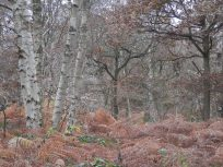 Sherwood ForestO