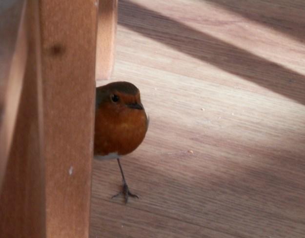 Robin in the Garden Centre cafe