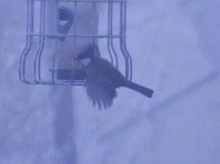 Frosty Flying Bird