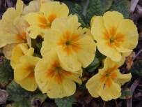 Spring in the Mencap Garden