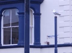 Gull - lurking in Llandudno