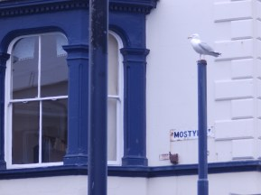 Gull - lurking in Llandudno