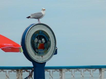 Herring Gull at Llandudno
