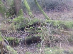 Moss at Rufford