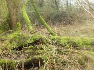 Moss at Rufford - Landscape setting