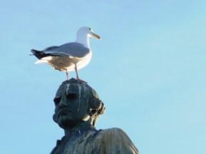 Captain Cook - perch