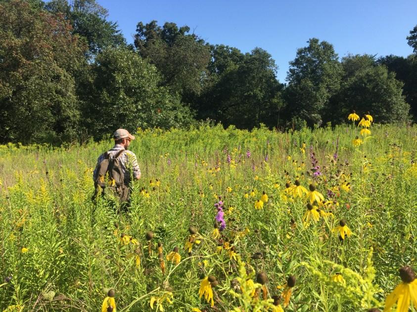 Botanical Survey 2019