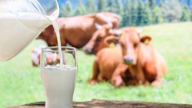 El 83% de la población consume leche de vaca
