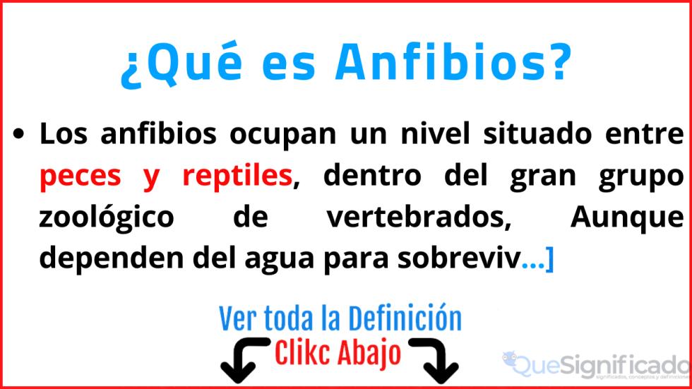 que es anfibios significado definición características ejemplos