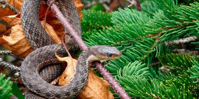 Soñar que matas a una serpiente