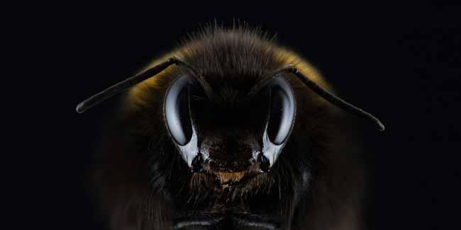 Soñar con abejas que te persiguen