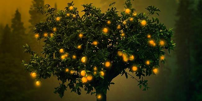 Soñar con arboles frutales