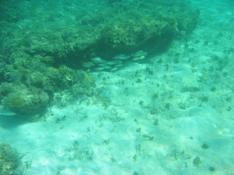 Reef at Shroud Cay