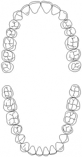 Let's Learn About Teeth!!: Process