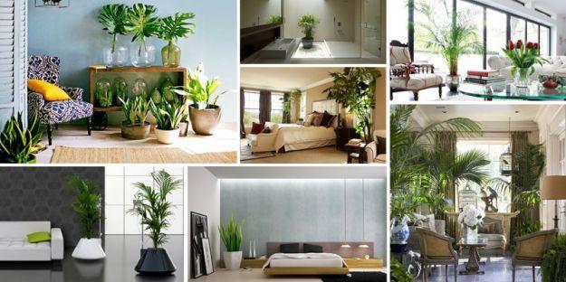 Piante per depurare l 39 aria in casa questioni di arredamento - Piante che purificano l aria in camera da letto ...