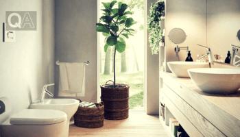 Le migliori piante da appartamento. - Questioni di Arredamento