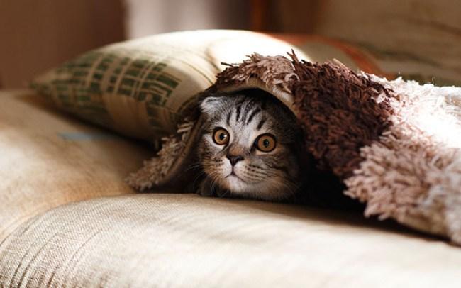 divano-graffiato-dal-gatto