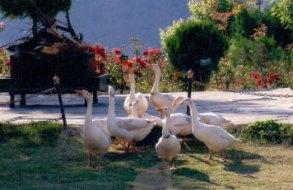 Classic Hilltop Resort, Chamba, Uttarakhand(3)