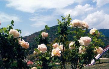 vacations in uttarakhand