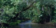 Jungle River in far North Queensland.