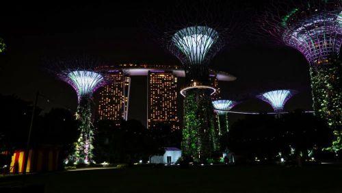 Supertree Grove en los Jardines de la Bahía de Singapur