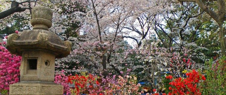 La primavera también son flores, y en Tokio se cuentan por millones durante el hanami