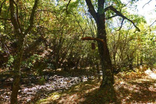 Río Jarama a su paso por el Hayedo de Montejo