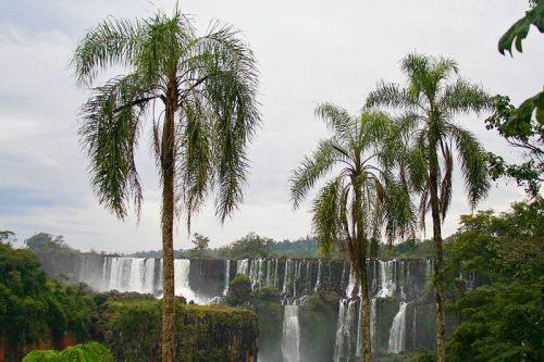 Selva de Iguazú rodeando las famosas cataratas