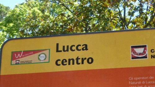 Medios de transporte disponibles para llegar a Lucca