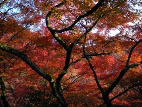 Momiji en Tokio, una de las épocas más bonitas para visitar la ciudad