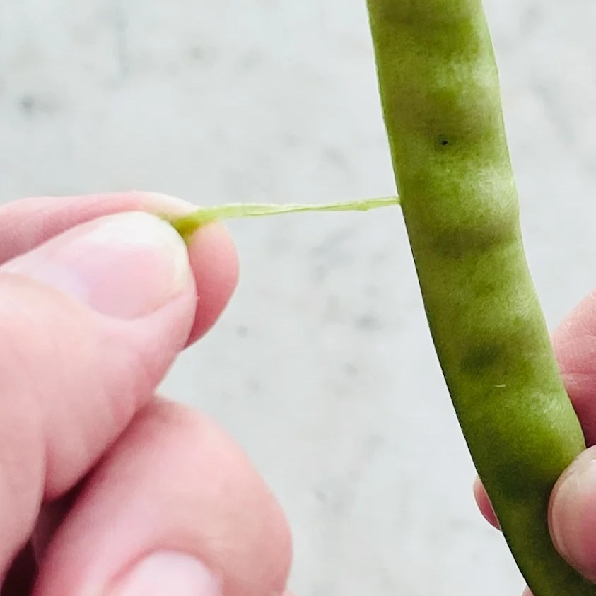 fingers pulling a string from a green bean