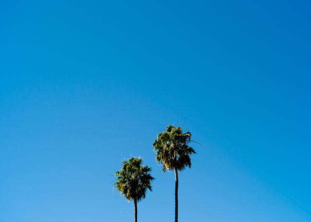 Two palm trees against the blue sky.