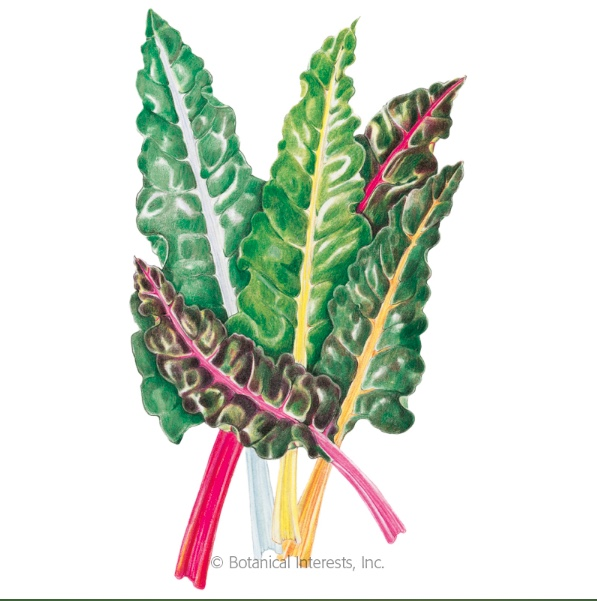 Bright Lights Swiss Chard, Image Courtesy of Botanical Interests