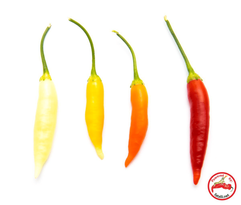 The Omnicolor Pepper Variety. Image Courtesy of Fatalii.