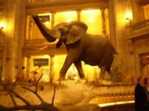 Elephant, Natural History