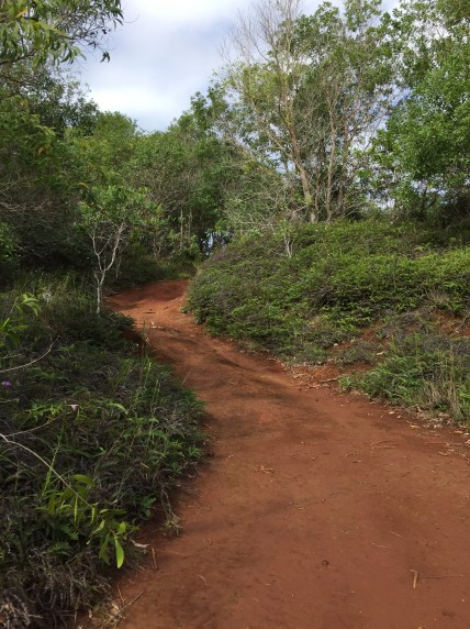 Hiking Tarzan Falls