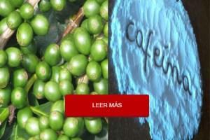 extracto-de-cafe-verde-y-cafeina-con-bb