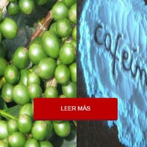 La Cafeína en los Granos de Café Verde Ayuda a Quemar Grasa