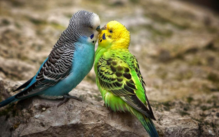 Are birds the right pet for you ?